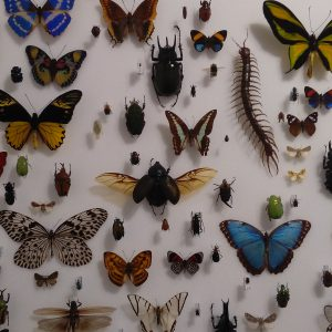 Insect wall at the Bug Farm Museum